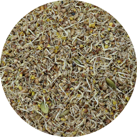 Sprouted-101 Sprouts, Large Bird Mix